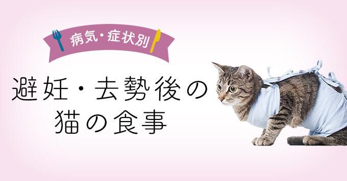 【獣医師監修】避妊・去勢後の猫の食事|避妊・去勢後向けキャットフード