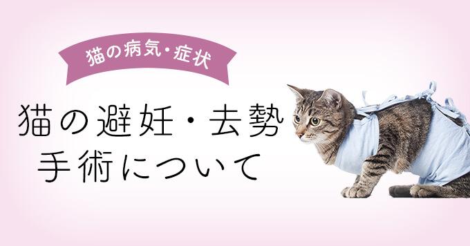 【獣医師監修】猫の避妊・去勢手術について