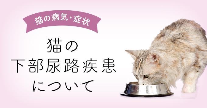 猫の下部尿路疾患食事アイキャッチ