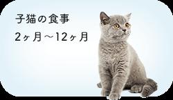 子猫の食事 2ヶ月〜12ヶ月