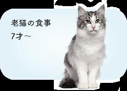 老猫の食事 7才〜