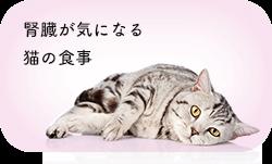 腎臓が気になる猫の食事