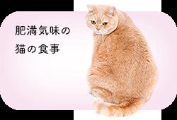 肥満気味の猫の食事