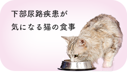 下部尿路疾患(FLUTD)・尿路結石が気になる猫の食事