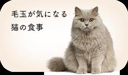 毛玉が気になる猫の食事