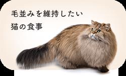 毛並みを維持したい猫の食事