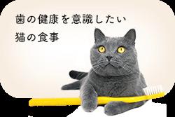 歯の健康を意識した猫の食事