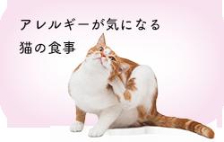 痩せ気味の猫の食事