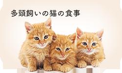 多頭飼いの猫の食事