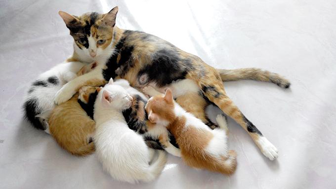 妊娠・授乳期の猫について