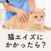 【獣医師監修】猫エイズにかかったら?|感染経路・症状・検査方法・寿命・予防法