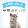 子猫の飼い方について