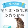 哺乳期・離乳期の猫の食事について | 生後すぐ〜60日頃