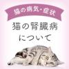 【獣医師監修】猫の腎臓病について
