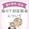 【獣医師監修】猫の下部尿路疾患(FLUTD)・尿路結石について