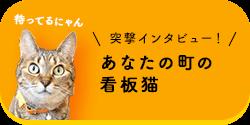 突撃インタビュー!あなたの街の看板猫 vol.1