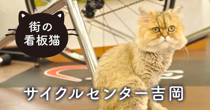 【看板猫】猫がくれた笑顔と縁~サイクルセンター吉岡