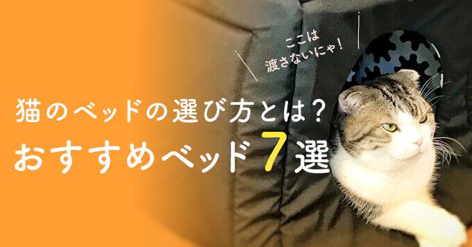 猫のベッドの選び方とは?おすすめベッド7選