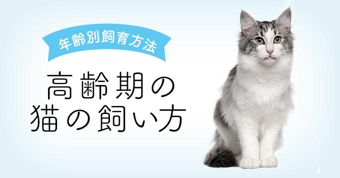 老猫の飼い方について