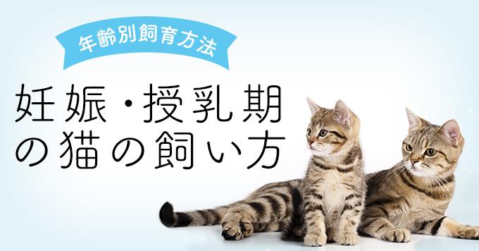 妊娠期・授乳期の猫の飼い方について
