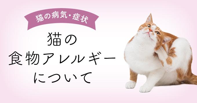 猫の食物アレルギーアイキャッチ