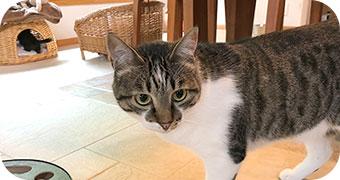 保護猫のわ通信 vol.1