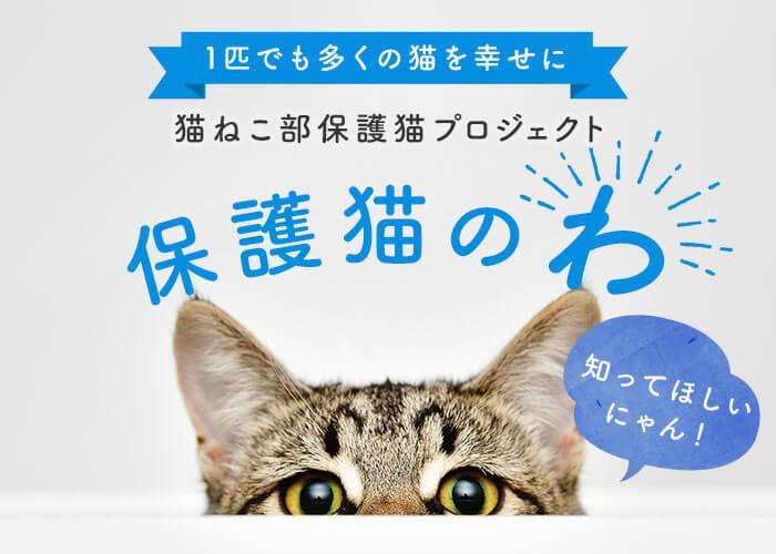 1匹でも多くの猫を幸せに 猫ねこ部保護猫プロジェクト 保護猫のわ