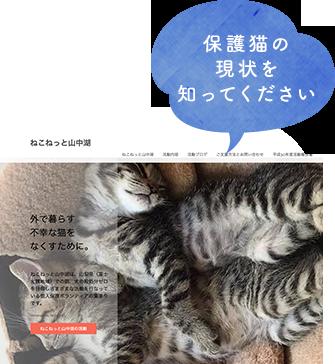 保護猫の現状を知ってください