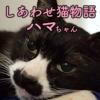 しあわせ猫物語Vol.1|「ハマ」ー地域猫はまぐりがいたから