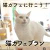 高齢者の方にこそ猫から得られる癒やしを~猫カフェブラン