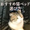 猫のベッドの選び方