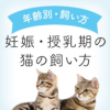 妊娠授乳期の猫の飼い方