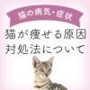 猫が痩せる原因と対処法について