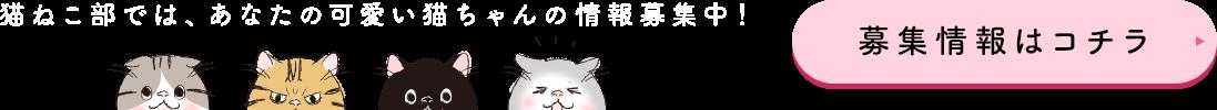猫ねこ部では、あなたの可愛い猫ちゃんの情報募集中! 募集情報はコチラ
