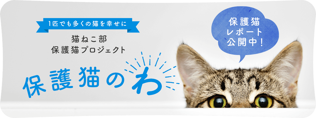 猫ねこ部保護猫プロジェクト 保護猫のわ