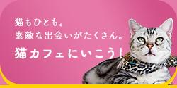 猫カフェに行こう!