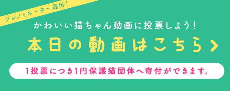 本日の動画はこちら かわいい猫ちゃん動画に投票しよう!1投票につき1円保護猫団体へ寄付ができます。