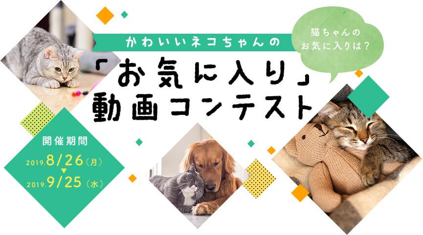 かわいいネコちゃんの「お気に入り」動画コンテスト