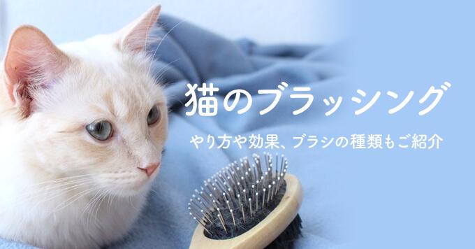 猫のブラッシングのやり方や効果とは?ブラシの種類もご紹介