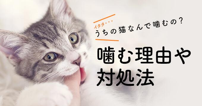 うちの猫なんで噛むの?噛む理由や対処法、しつけ方を大調査