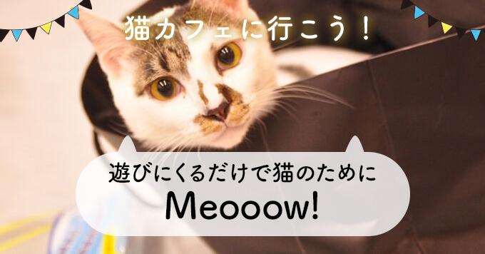 飼えなくても遊びにきてくれるだけで猫のためになる~保護猫カフェMeooow!