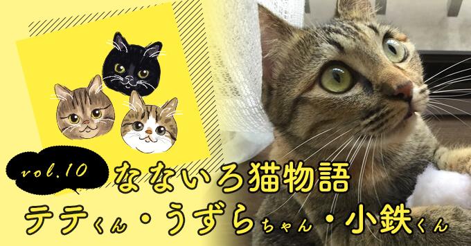なないろ猫物語Vol.10|「テテ・うずら・小鉄」ー命の危険が迫っていた3匹の猫たちに救いの手を