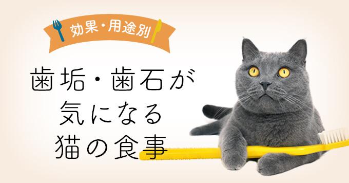 歯垢・歯石が気になる猫の食事|歯垢・歯石ケアキャットフード