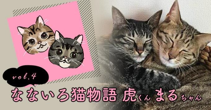 なないろ猫物語Vol.4|「虎まる」ーあのときの偶然がなかったら今の幸せはなかった