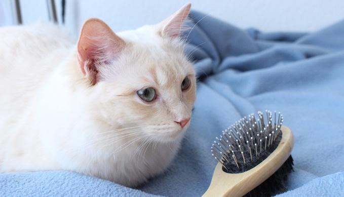 猫のブラッシングの効果
