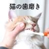 歯ブラシを見せると逃げられる飼い主さん必見!猫の歯磨きのコツや効果をご紹介