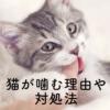 猫が噛む理由と対処法