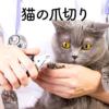 猫の爪切りが苦手な飼い主さんへ送る!爪の切り方やコツ