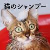 猫のシャンプー