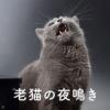 老猫の夜鳴き